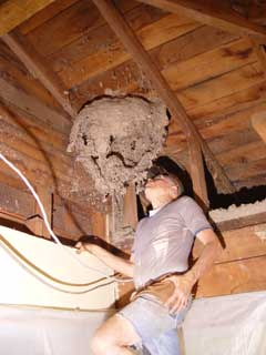 House Repairs And Renovations 4